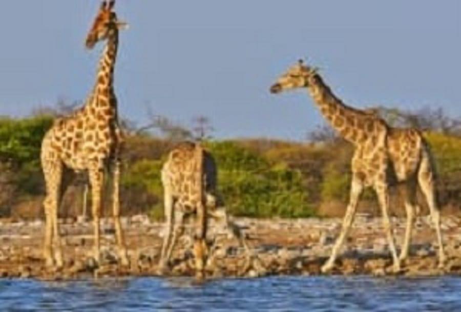 Voyage Kenya,séjour Tanzanie