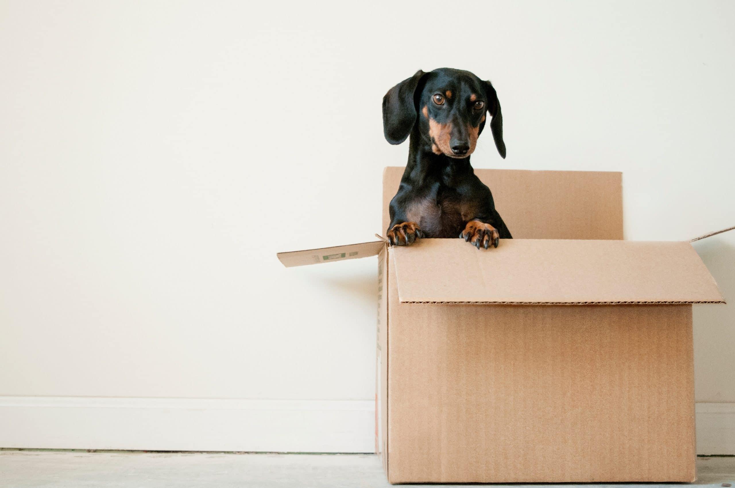 Un chien dans un carton